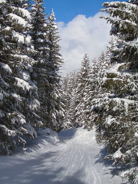 Snowboard grindelwald