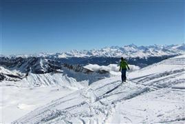 Snowboard and Ski elm (c) Nic Oatridge